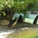 zoo_city50